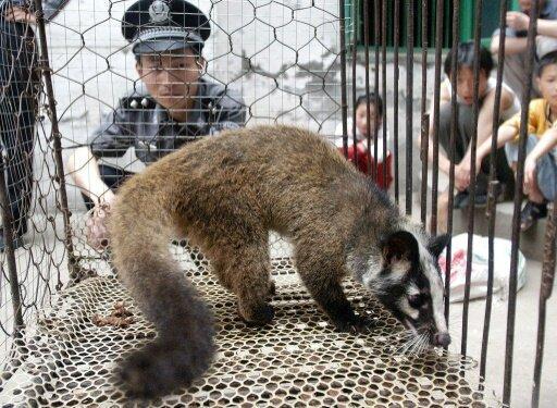 چین، تجارت حیوانات وحشی را ممنوع نمود