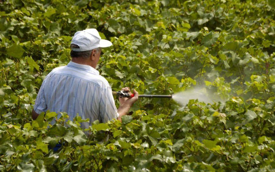 سموم کشاورزی تولید شده ایرانی به ترکیه می رود ، ارزآوری 500 هزار دلاری
