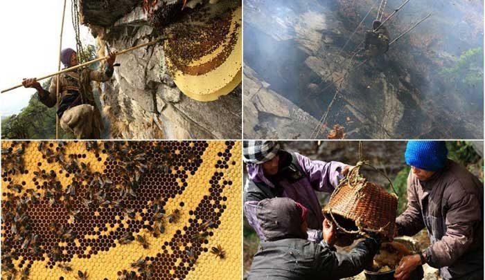 یک تور گردشگری خاص برای علاقه مندان به دیدن روش کامل برداشت عسل در هیمالیا!، تصاویر