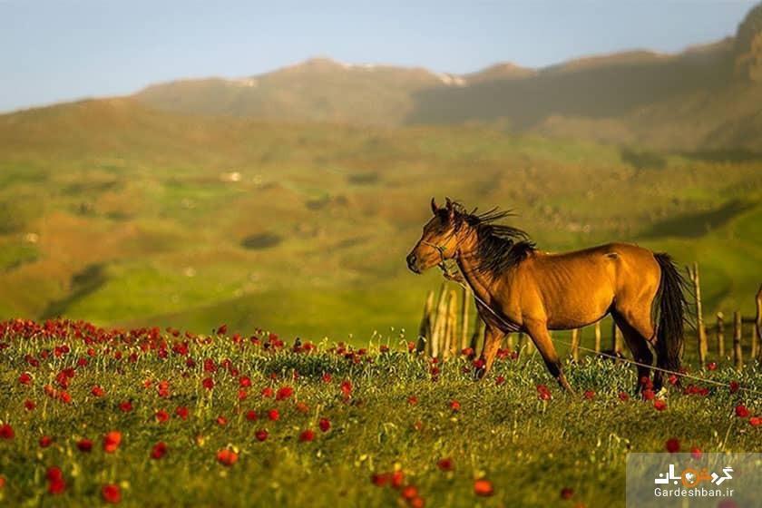 شکردشت؛زیباترین روستای تالش برای سفر در تابستان، تصاویر