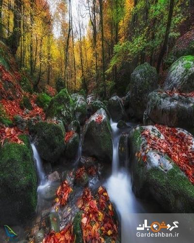 جنگل راش؛ ارزشمندترین جاذبه طبیعی ایران در مازندران، تصاویر
