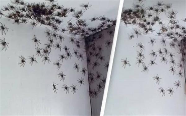 صحنه ای که مادر استرالیایی را در اتاق دخترش به وحشت انداخت!