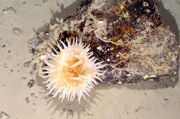 کشف موجودات دریایی که 50 سال زیر یخ پنهان بودند کشف موجودات دریایی که 50 سال زیر یخ پنهان بودند
