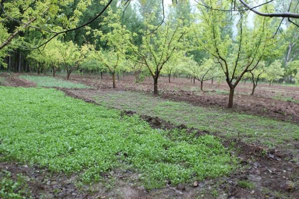 خبرنگاران باران مزارع تشنه استان اردبیل را سیراب کرد